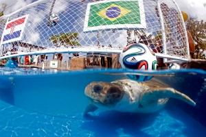 Cabecao the Predicting Turtle (Lucio Tavora/AP)
